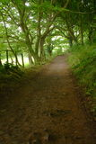 Secret Path to Mewslade Royalty Free Stock Photo