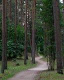 Secret path in the woods invites to explore stock photos