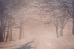 Secret pathway in the mystery forest with snow. Umbria, Italy, Europe Royalty Free Stock Image