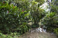 Pond with water well in Konoko Gardens, Jamaica royalty free stock photo