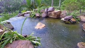 Secret place: a small tropical pool before the rain royalty free stock image