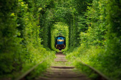 Secret train 'tunnel of love' in ukraine. Secret train 'tunnel of love Royalty Free Stock Photos