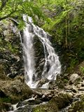 Forested waterfall royalty free stock photography