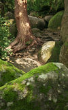 Secret way in ancient wood forest. Big roots of pine, stones with moss and secret way in ancient wood forest stock photos