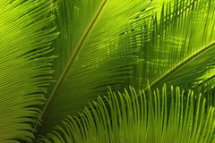 Secret World in a Cycad Royalty Free Stock Image
