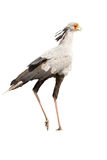 Secretary Bird. Seen during safari tour at Namibia, Africa stock photo