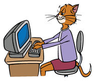 Secretary cat Royalty Free Stock Images