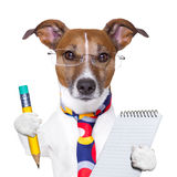 Secretary dog Stock Images