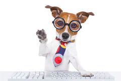 Secretary dog Stock Image