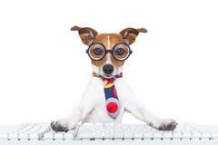 Secretary dog Royalty Free Stock Image