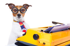 Secretary typewriter  dog Royalty Free Stock Image