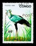 Secretarybird (Sagittarius serpentarius), Birds serie, circa 199. MOSCOW, RUSSIA - NOVEMBER 26, 2017: A stamp printed in Congo shows Secretarybird &# Stock Photography