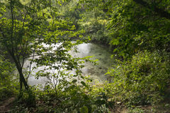 Secretive small natural pond tucked in a nature reserve Royalty Free Stock Photo