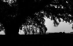 Secreto de la naturaleza Fotografía de archivo