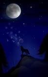 Secreto del claro de luna Fotografía de archivo