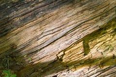 Secretos de un ?rbol viejo caido en el bosque foto de archivo libre de regalías