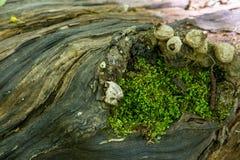 Secrets d'un vieil arbre tomb? dans la for?t photo stock