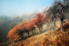 Secrets des montagnes brumeuses Photo libre de droits