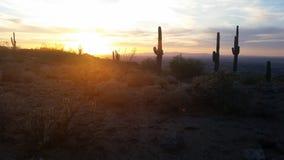 Secrets of Desert Royalty Free Stock Photo