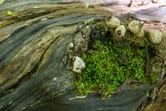 Secrets of an old tree fallen in the forest stock photo