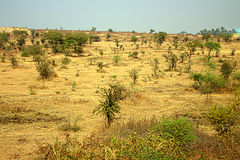 Secteur autour de Nagpur, Inde Collines sèches Image libre de droits