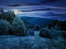 Secteur boisé en montagnes la nuit photos libres de droits