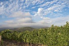 Secteur d'élevage de vin Photos libres de droits