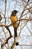 Secteur d'arbre : Oiseau Photo libre de droits