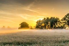 Secteur de conservation de la nature au lever de soleil Images libres de droits