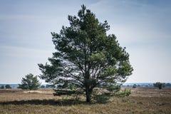 Secteur de conservation de la nature avec beaucoup d'arbres Image libre de droits