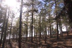 Secteur de hauts pins dans la montagne avec le terrain de jeu et le barbecue photographie stock