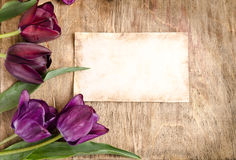 Secteur des tulipes et de la carte fraîches Photo stock