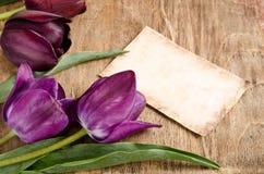 Secteur des tulipes et de la carte fraîches Photos libres de droits