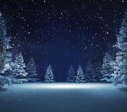Secteur gratuit en bois neigeux d'hiver Photographie stock libre de droits
