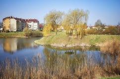 Secteur résidentiel avec un parc d'étang Images libres de droits