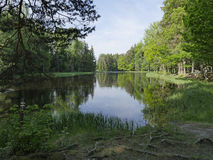 Secteur saumoné suédois Image stock
