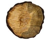 Sectie van een oude boom Stock Afbeeldingen