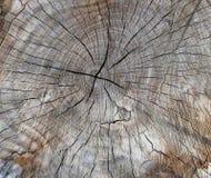 Sectie van een oude boomboomstam met houten barsten stock afbeeldingen