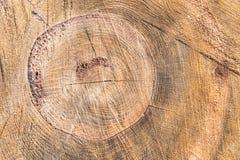 Sectie van een oude eiken boom met barsten en van boomringen textuur stock afbeeldingen