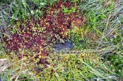 Sectie van moerasgrond Royalty-vrije Stock Foto