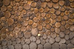 Secties boomboomstammen Houten muurachtergrond Royalty-vrije Stock Afbeelding