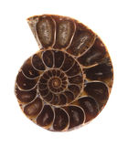 Section of ammonite Royalty Free Stock Images