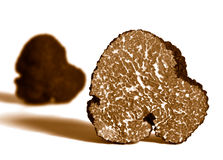 Section of black truffle Stock Photography