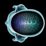 Section de cerveau de corps de fonction de synapse de neurones Images libres de droits