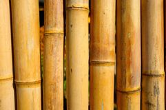 Section of a dried bamboo cane fence.  Royalty Free Stock Images