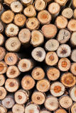 Section of eucalyptus logs Royalty Free Stock Images
