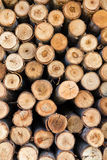 Section of eucalyptus logs Royalty Free Stock Photo