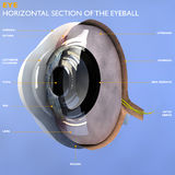 Section of an eye Royalty Free Stock Photo