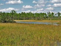 Florida Trail Marsh Land. A section of the Florida Trail that travels through marshlands in Palm Beach County Royalty Free Stock Photo