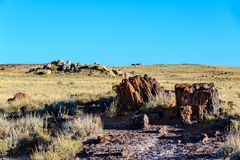 Petrified wood in grassy field; rocks and small stone cabin in background with bue sky. Section of Fossilized tree in grassy field in Arizona`s Petrified Forest royalty free stock image